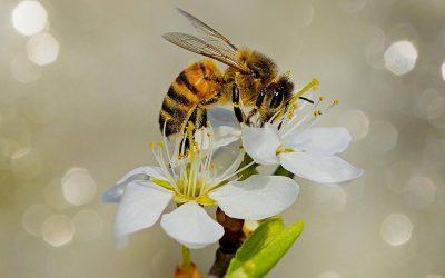 Segítsük a méhek túlélését!