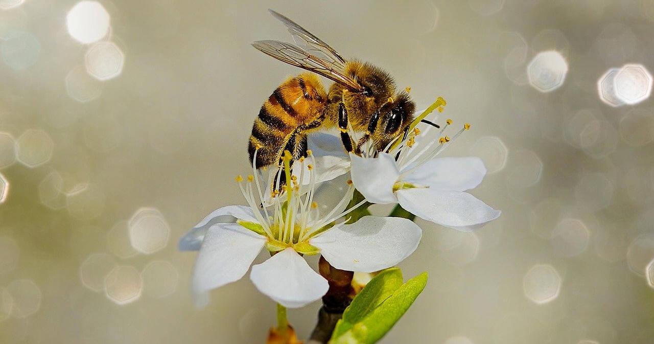 Segítsük a méhek túlélését